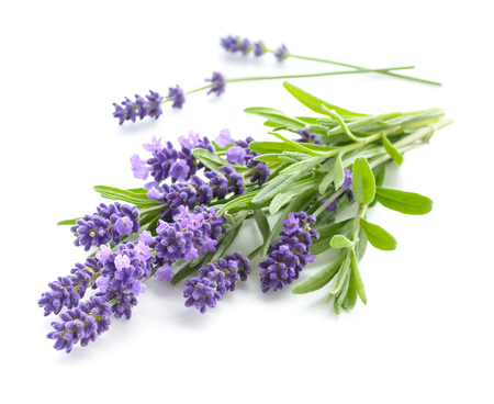 Photo pour Lavender bunch on a white - image libre de droit