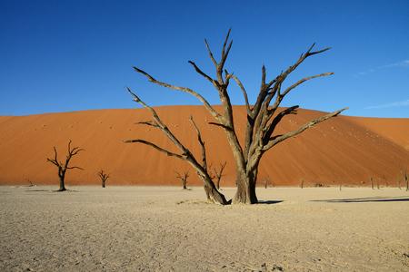 Photo for Dead Vlei, Sossusvlei, Namibia - Royalty Free Image