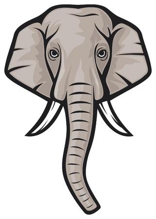 elephant head  indian elephant