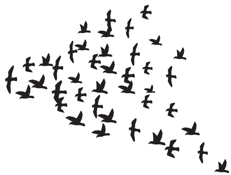 Illustration pour a flock of flying birds silhouette of the birds in flight - image libre de droit