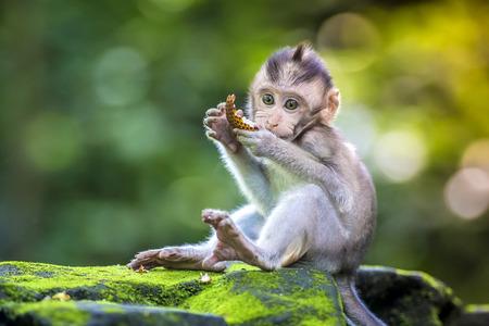 Photo for Little baby-monkey in monkey forest of Ubud, Bali, Indonesia - Royalty Free Image
