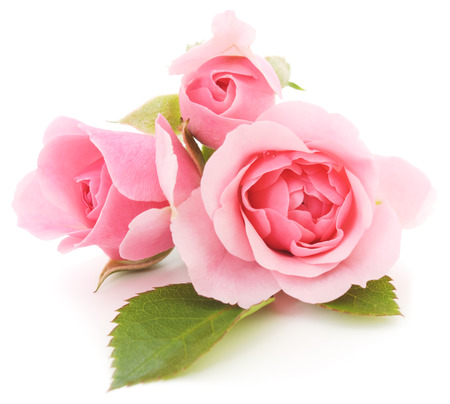 Photo pour Three beautiful pink roses on a white background  - image libre de droit