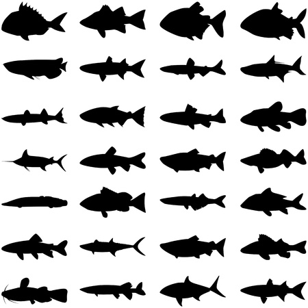 Illustration vector of different kinds of fish silhouette.