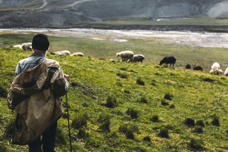 Photo pour Shepherd With Sheep On The Field In Mountains, Rear View. Agriculture Concept - image libre de droit