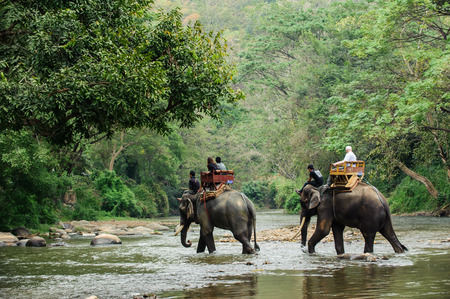 Foto de Elephant trekking through jungle in northern Thailand - Imagen libre de derechos