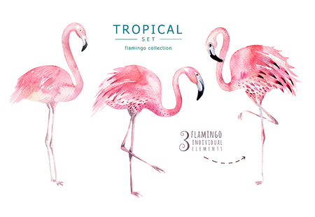 Foto de Hand drawn watercolor tropical birds set of flamingo. Exotic bird illustrations, jungle tree, brazil trendy art. Perfect for fabric design. Aloha set - Imagen libre de derechos
