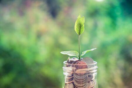 Foto de Sprout growing on glass piggy bank in saving money concept with filter effect retro vintage style - Imagen libre de derechos