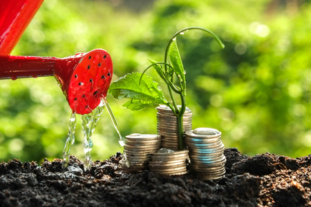 Photo pour Money growth concept plant growing out of coins - image libre de droit