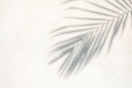 Foto de abstract background texture of shadows palm leaves on a concrete wall - Imagen libre de derechos
