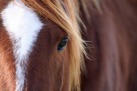 Quarter horse\'s mane kissed by sun rays