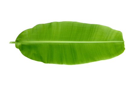 Photo pour banana leaf on white background - image libre de droit