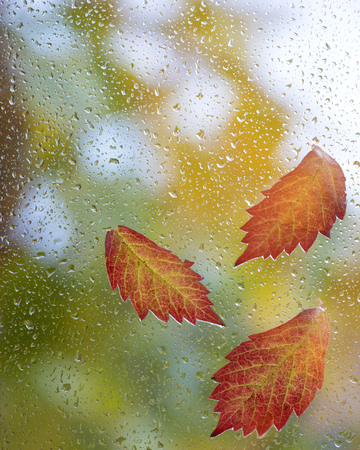 Red autumn leaves on window with rain drops