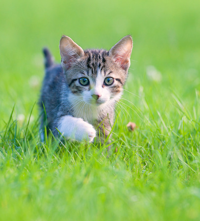 Foto de Little striped kitten hiding in the grass - Imagen libre de derechos