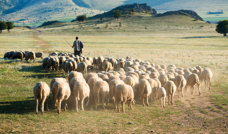 Photo pour Shepherd and herd of sheep - image libre de droit