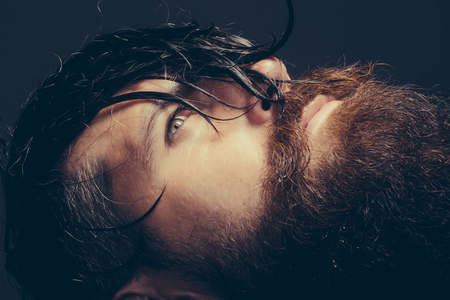 Photo for handsome sexy bearded young man hipster with long beard and mustache has wet hair on serious hairy face, closeup - Royalty Free Image