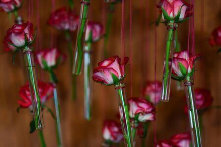 Foto de Flower in glass tube vases, floral decor, spring. Flower with red petals hang on string on orange background. - Imagen libre de derechos