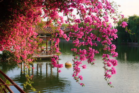 Photo for Flowers in Chinese park  Kunming  China  - Royalty Free Image