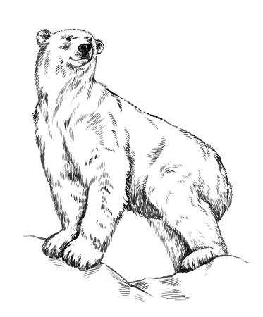 Ilustración de black and white engrave ink draw isolated vector polar bear - Imagen libre de derechos