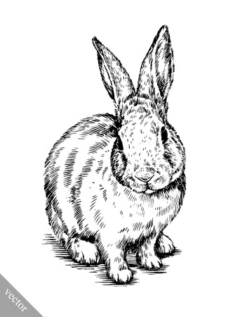 Illustration pour black and white vector brush painting ink draw isolated rabbit illustration - image libre de droit