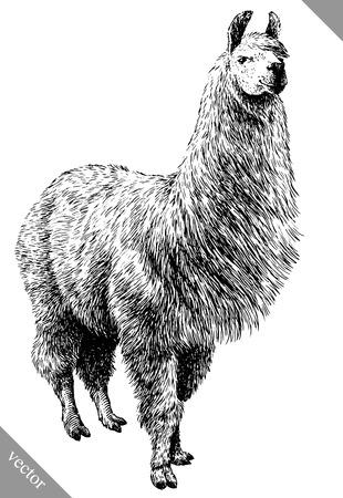 Ilustración de black and white engrave isolated Lama vector art - Imagen libre de derechos