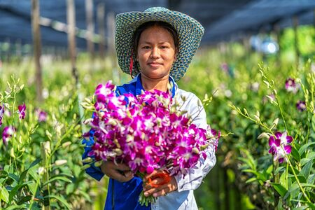 Photo for Portrait asian gardener of orchid gardening farm, The purple orchids are blooming in the garden farm, Happiness worker holding bundle of blossom, Purple orchids in farming of bangkok, thailand. - Royalty Free Image