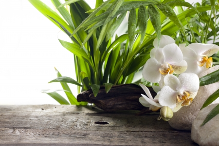 Orchids on stone and wooden boards spa concept background