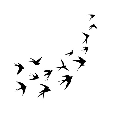 Illustration pour A flock of birds swallows go up. Black silhouette on a white background. Vector illustration. - image libre de droit