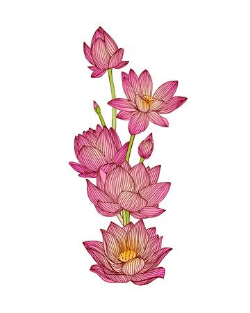 Illustration pour vector illustration of lotus flower bouquet - image libre de droit