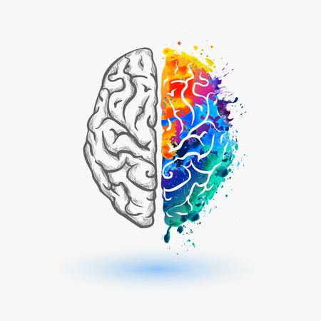 Illustration for brain hemispheres - Royalty Free Image