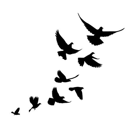 Ilustración de A flock of birds pigeons go up. Black silhouette on a white background. - Imagen libre de derechos