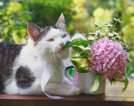 Foto de cat chewing hydrangea flowers post card photo - Imagen libre de derechos