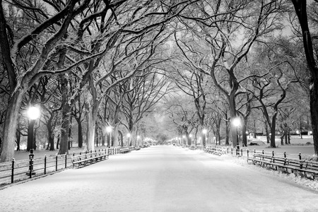 Photo pour The Mall, Central Park, NYC during a snow storm, early in the morning. - image libre de droit