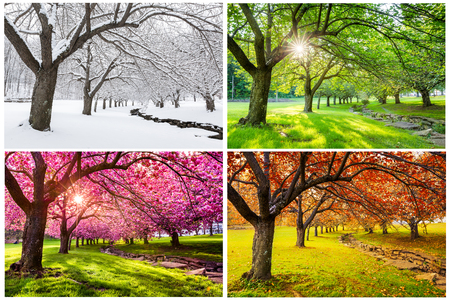 Photo pour Four seasons with japanese cherry trees in Hurd Park, Dover, New Jersey - image libre de droit
