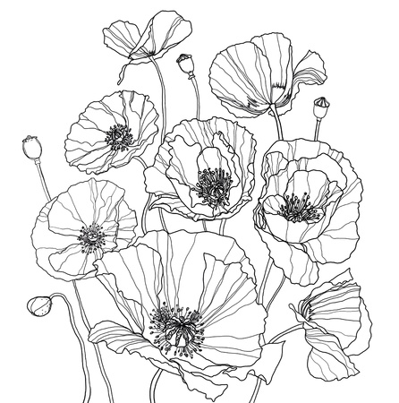 Coloring page with poppies.  mural