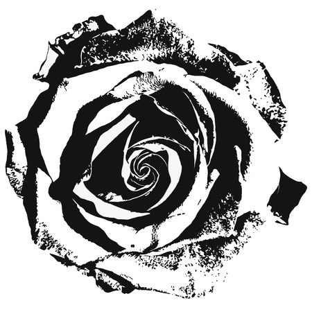 Illustration pour Stylized rose siluette black and white - image libre de droit