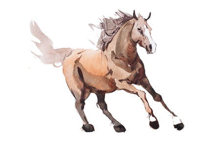 Photo for watercolor painting of galloping horse, free running mustang aquarelle. - Royalty Free Image