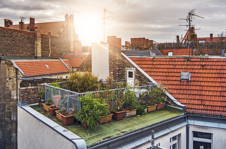 Photo for small rooftop garden with lots of potted plants on a sunny evening - Royalty Free Image
