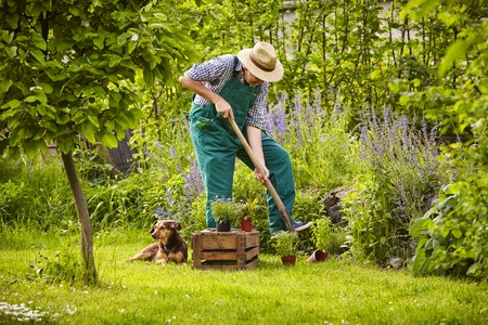 Photo pour Man with straw hat working in the garden - image libre de droit
