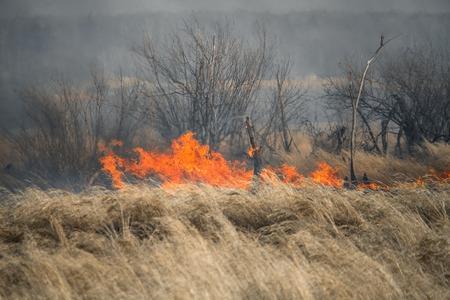 Foto de Nature disaster, environmental problem of the air pollution. Fire in a forest - Imagen libre de derechos