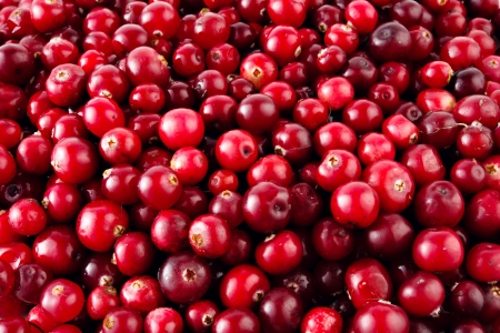 Photo for Red ripe cranberries background - Royalty Free Image
