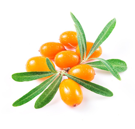 Photo for sea buckthorn berries isolated on the white - Royalty Free Image