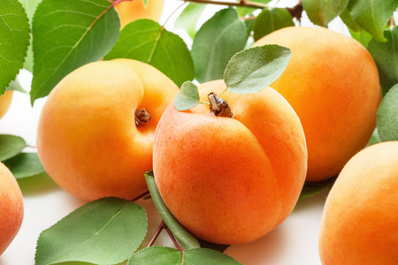 Photo for Fresh apricots - Royalty Free Image