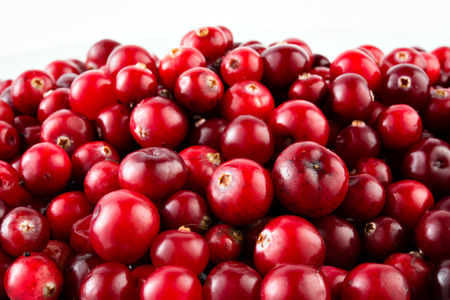 Photo for Red ripe cranberries - Royalty Free Image