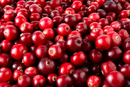 Photo for Cranberries macro. - Royalty Free Image