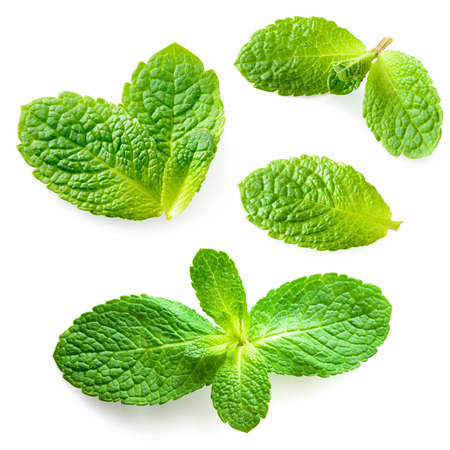 Photo for Fresh mint leaves isolated on white background. Collection - Royalty Free Image