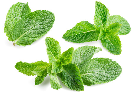 Photo for Fresh mint isolated on white. Collection - Royalty Free Image