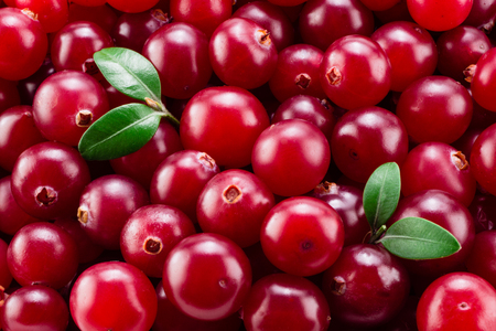 Photo for Cranberry with leaves macro. Background. - Royalty Free Image