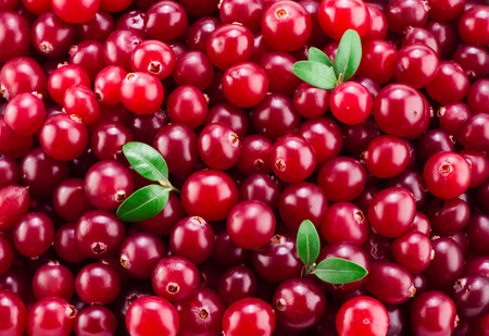 Photo for Fresh ripe cranberry in water. Red berries with drops. Food back - Royalty Free Image