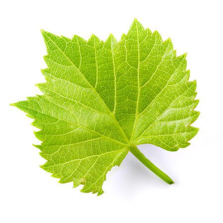 Photo for Grape leaf isolated on white. - Royalty Free Image