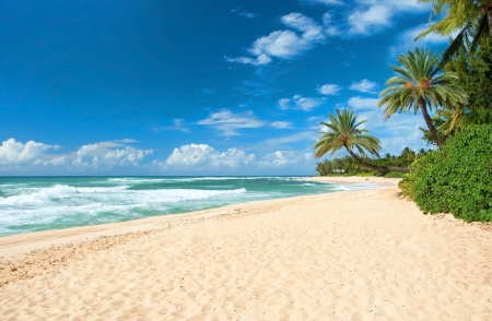 Photo pour Untouched sandy beach with palms trees and azure ocean in background   - image libre de droit